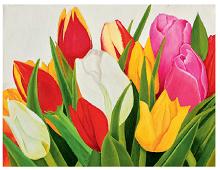 Enkeltkort med bilde av fargerike tulipaner. Bilde.